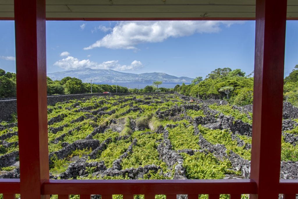 Vineyards Fields in Azores, Portugal